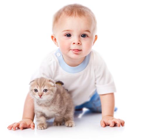 alergiile la copii pisici