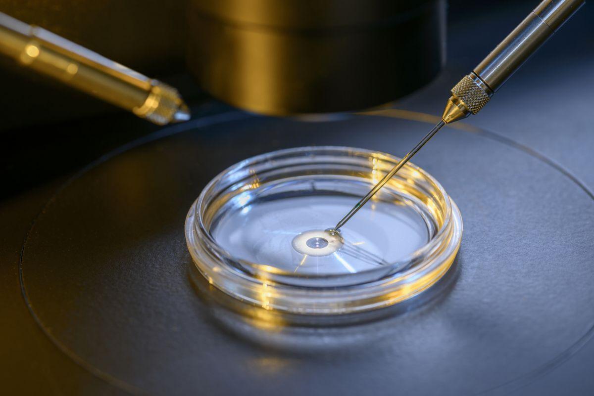 Fertilizare in vitro gratuită 2017
