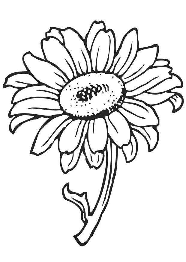 Planșe De Colorat Cu Flori Totul Despre Mame